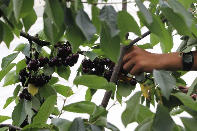 Beykoz'da dev tarım projesi atağı sürüyor