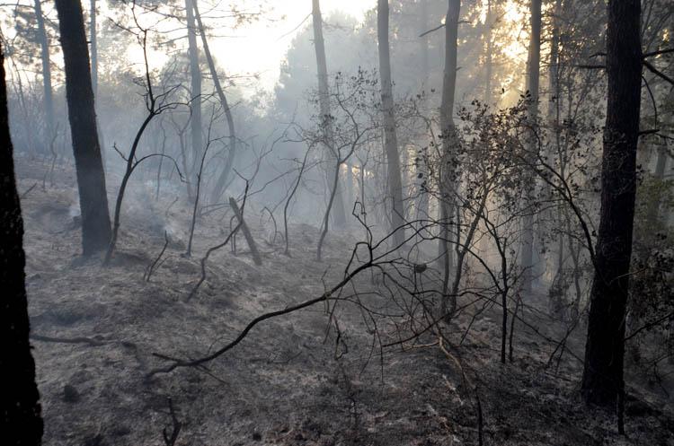Beykoz faciadan döndü, yüzlerce ağaç kül oldu