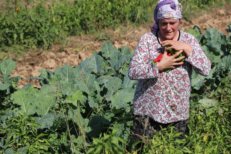 Beykoz'un kent tarımı kadın çiftçilere emanet
