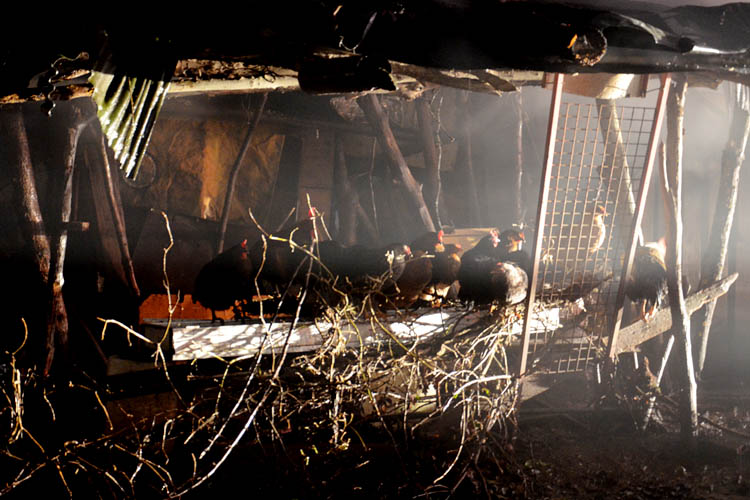 Beykoz'daki yangında hayvanlar telef oldu