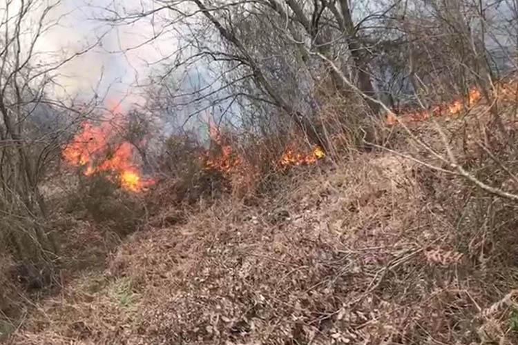 Beykoz'da orman yangını çıktı hava desteği istendi