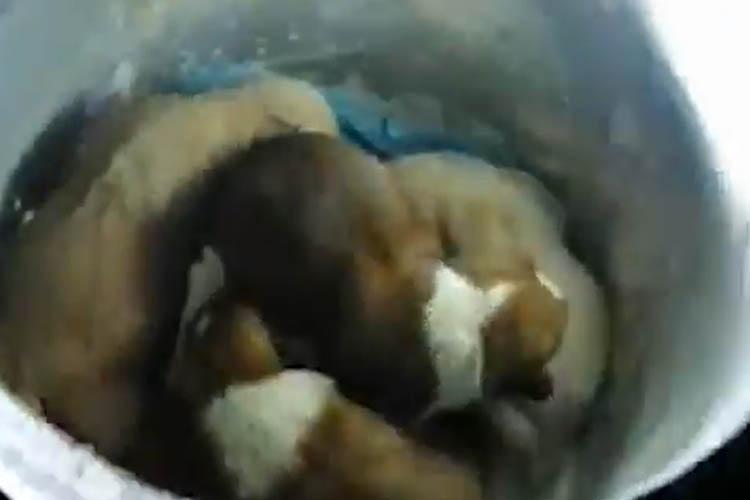 Beykoz'da çöpten 7 köpek çıkarıldı