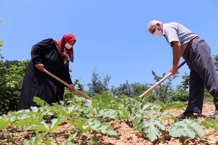Beykoz'da adil sözleşmeli tarımda yeni sezon