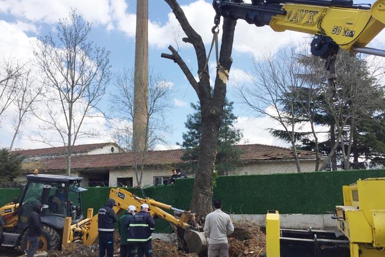 Beykoz'da ağaç kurtarma operasyonu saatlerce sürdü