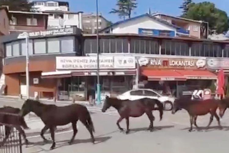 Hanefi Dilmaç: Beykoz'da atlar özgürce yaşar