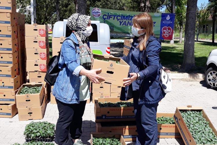 İstanbul Büyükşehir Belediyesi Beykoz'da fide dağıtımına başladı