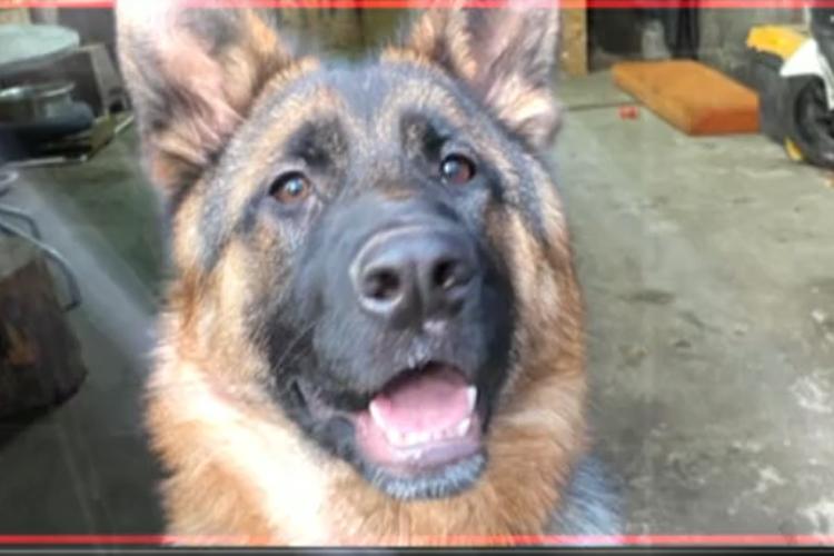 Beykoz'da havasızlıktan ölen köpek gündem oldu
