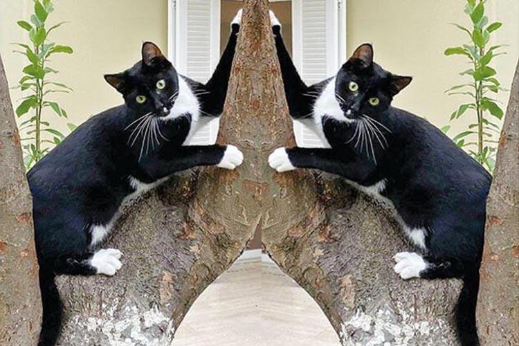 Ertuğrul Özkök Beykoz'da kara kedisine kavuştu