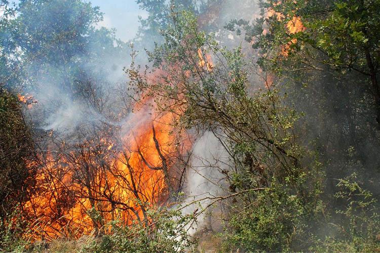 Beykoz ormanlarında yangın çıktı
