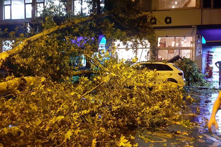 Beykoz Anadoluhisarı'nda çınar ağacı araçların üzerine düştü