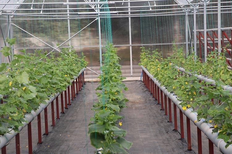 Beykoz'da topraksız tarım AR-GE uygulaması başladı