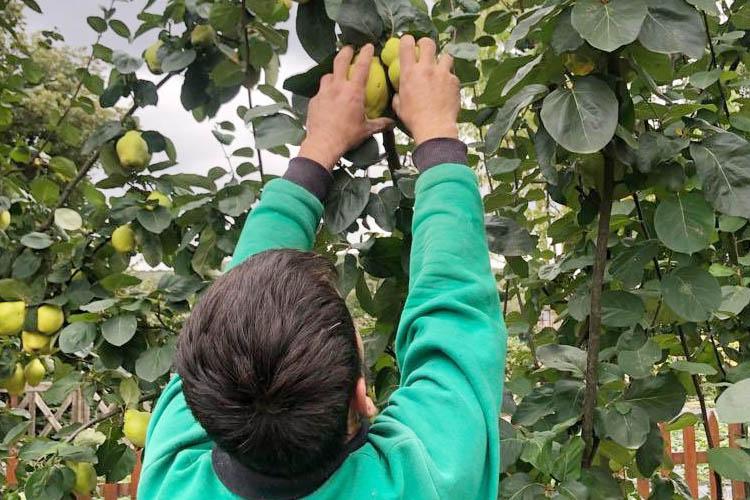 Beykoz'da dalından vatandaşa meyve