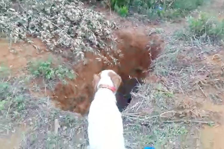 Beykoz'da kuyuya düşen mandayı av köpeği buldu